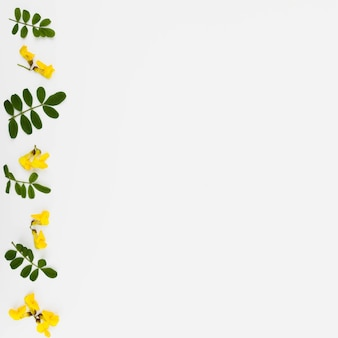 Row of yellow flower and leaves twig isolated on white background
