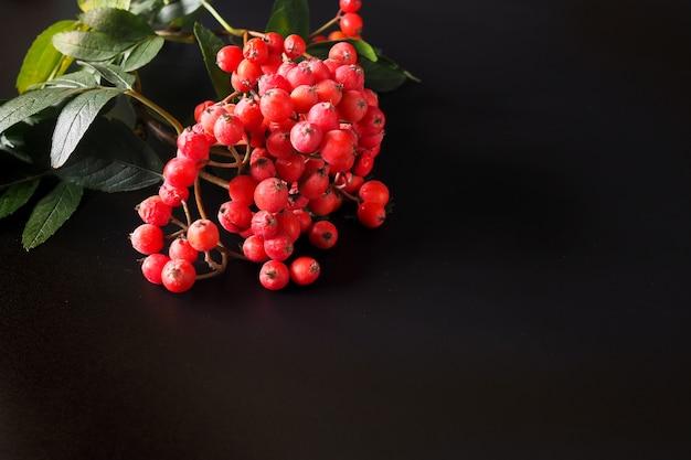 검정색 배경에 마가목 열매 선택적 초점 복사 공간