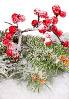 Ягоды рябины с елью, покрытые снегом, изолированные на белом фоне