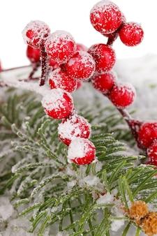 雪に覆われたトウヒとナナカマドの果実