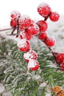 Ягоды рябины с елью, покрытые снегом