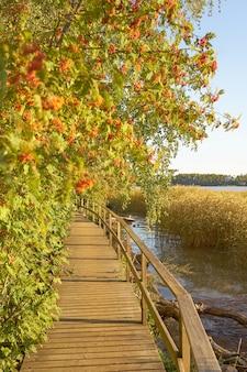 Рябина и деревянный мост в лучах солнца.