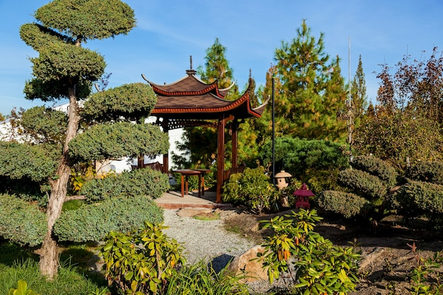 Rows of bansai trees in a garden center selling plants. seedlings of various trees in pots in a garden shop. sale of many varieties of coniferous and deciduous trees, various flowers, everything to de