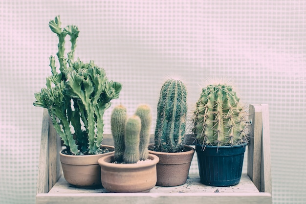 Группа рядов различных зеленых кактусов в глиняных и пластиковых горшках на деревянной полке.