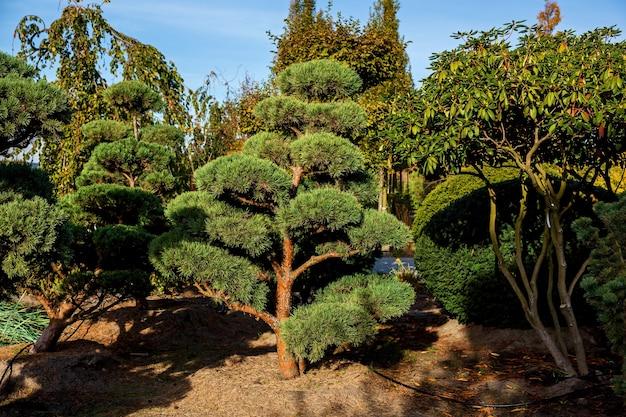 식물을 판매하는 가든 센터의 반사이 나무 줄 화분에 담긴 다양한 나무의 묘목 i