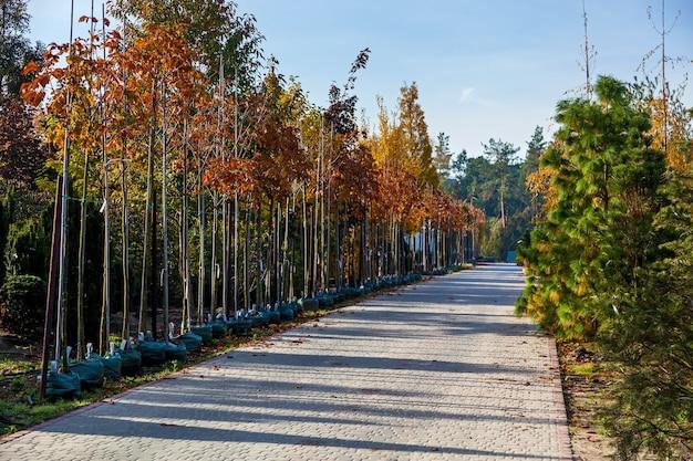 植物を売る園芸用品センターの番西の木の列鉢植えのさまざまな木の苗i