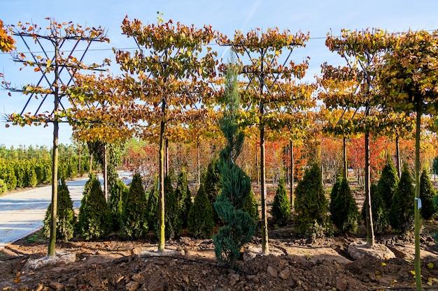 다양한 나무의 묘목을 판매하는 정원 센터의 낙엽수 줄