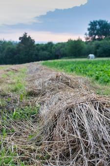冬に牛に餌をやる、夏に干し草を収穫するための乾いた草の列