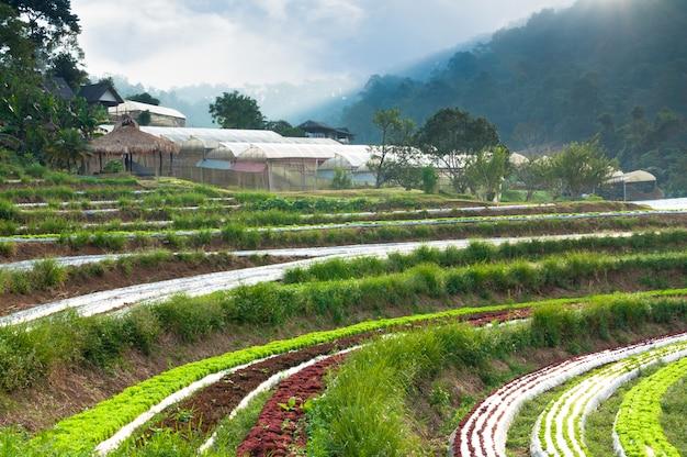 Ряды плантации свежего салата и овощей знакомого сельского хозяйства и теплицы в сельской местности в таиланде
