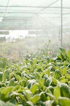 다른 꽃과 덤불의 벽에 있는 대형 현대 온실 내부에서 자라는 녹색 잎이 있는 식물의 행