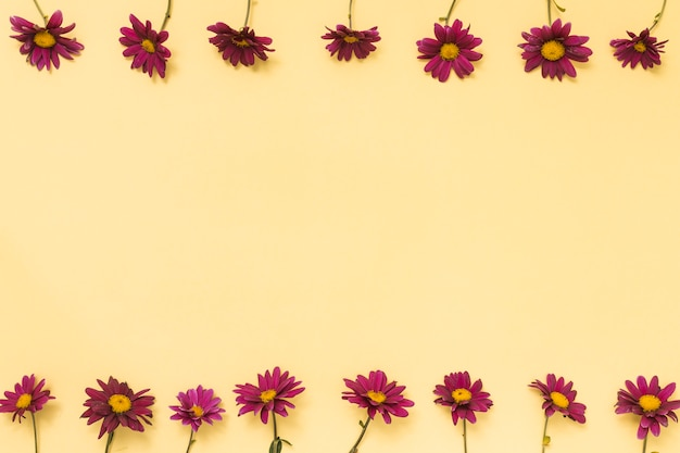 Rows of pink flowers on table