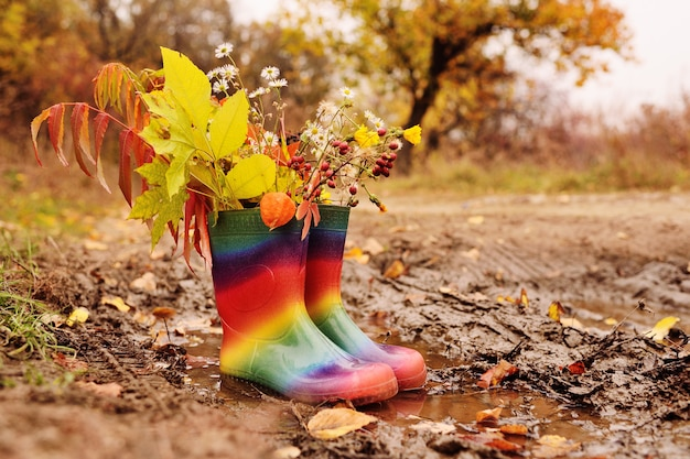 Rubber boots rainbow color with a bouquet of yellow leaves and autumn flowers in a puddle and dirt
