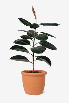 テラコッタポットの家の装飾オブジェクトのゴム植物