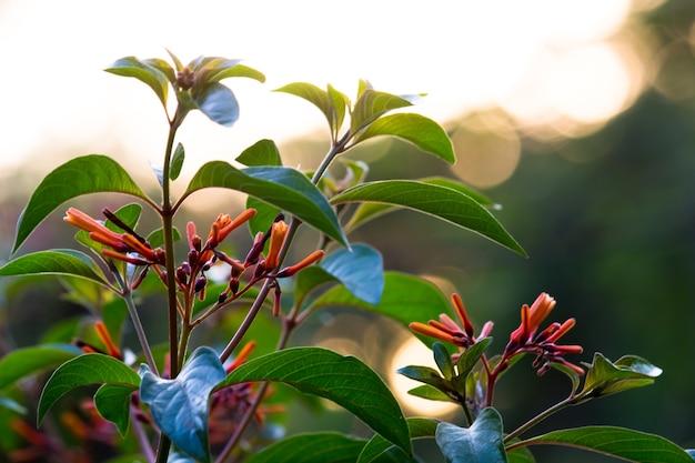 春の間に自然の背景に対して満開のルビーレッドペンタスの花または鳥の植物