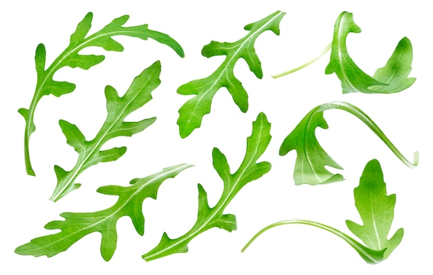 ルッコラの葉白で隔離され、単一の緑のルッコラの葉コレクション