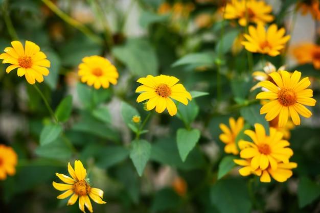 Природа фото макроса зацветая желтая rudbeckia цветет. изображение rudbeckia цветкового растения, желтых маргариток. осенние цветы в парке. желтая рудбекия фульгида цветы в саду. концепция природы