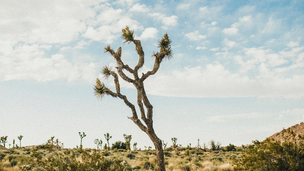カリフォルニアの砂漠の起伏の多い地形