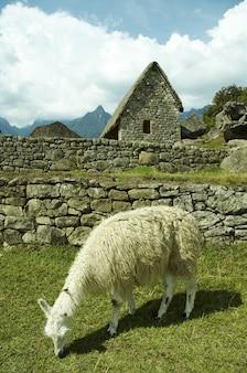 失われたインカの都市マチュピチュ、ペルーの遺跡とラマ