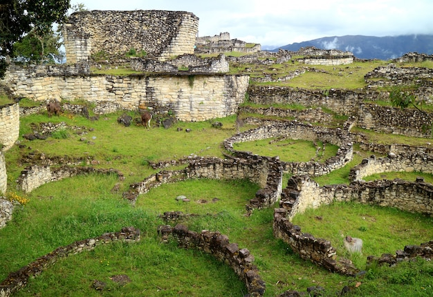 The ruins inside kuelap archaeological site with many of ancient stone round houses, peru