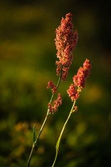 숲 근처의 꽃이 만발한 초원에 있는 루멕스. 말 밤색.