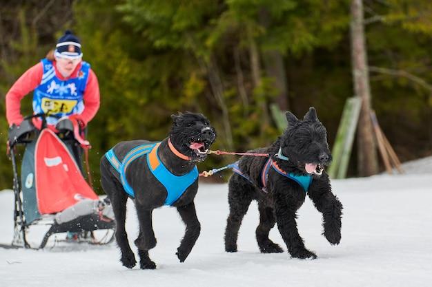 눈 덮인 크로스 컨트리 도로에서 경주하는 썰매 개에 달리기 개