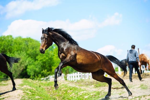 走っている馬