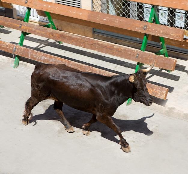 Бег быков на уличном фестивале в испании