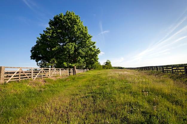 農村地域-道路と畑を囲んでいる木製の柵。