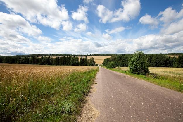 Сельская асфальтированная дорога летом. дорога через поле