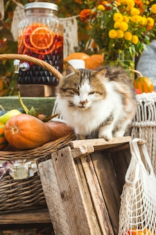 A rural cat among cottage decor in a rural backyard. autumn slow life concept.