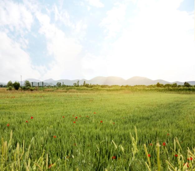 花のフィールドを持つ農村のコンセプト