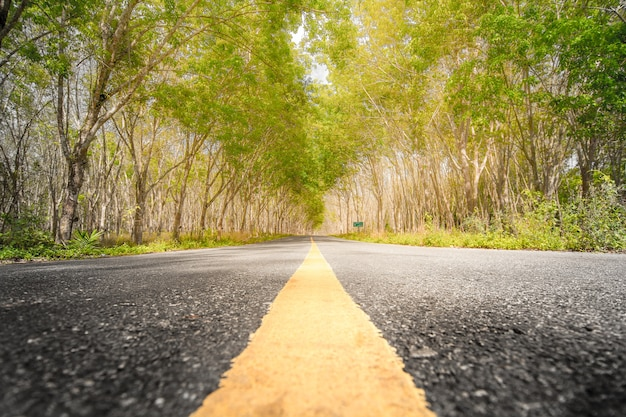 Rural country long road on rubber tree plantation in the summer time, south side thailand.