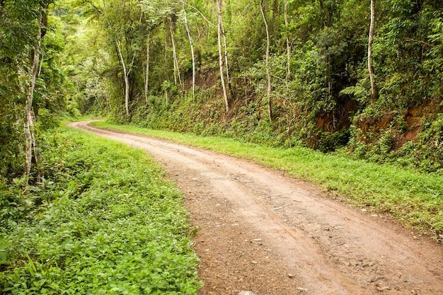 Сельская грунтовая дорога в лесу