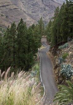 Сельская пустая дорога с соснами по бокам