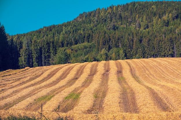 시골 풍경, 산에 대한 경 사진 밀밭