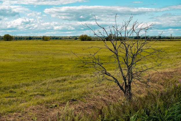 Rural landscape, dead tree at the edge of a mown meadow