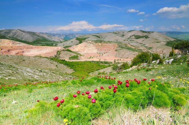 시골 풍경, 키가 큰 푸른 잔디가있는 필드, 성장하는 나무와 관목이있는 백그라운드에서 언덕