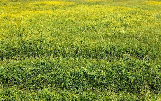 Alto angolo di paesaggio rurale