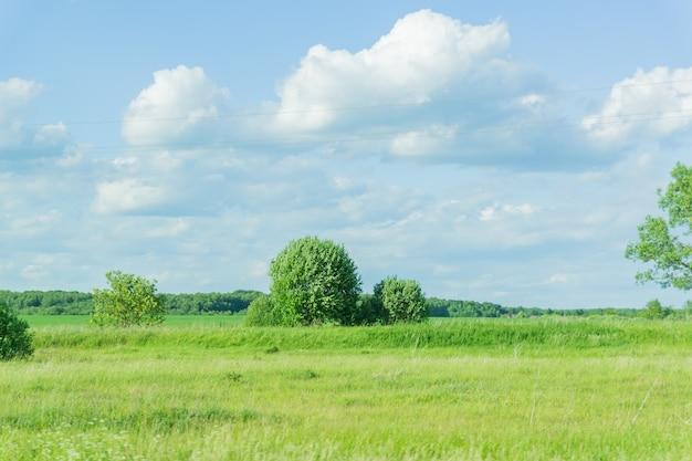 夏の晴れた日の田園風景。