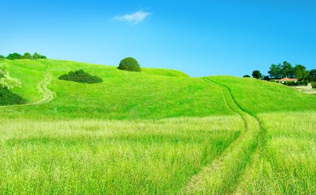 귀리 들판을 가로지르는 시골 도로가 있는 시골 풍경