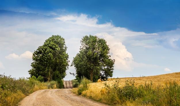 フィールドと道路の近くの木々の道と田園風景