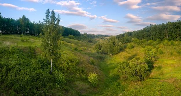 Сельский утренний туманный пейзаж с деревьями