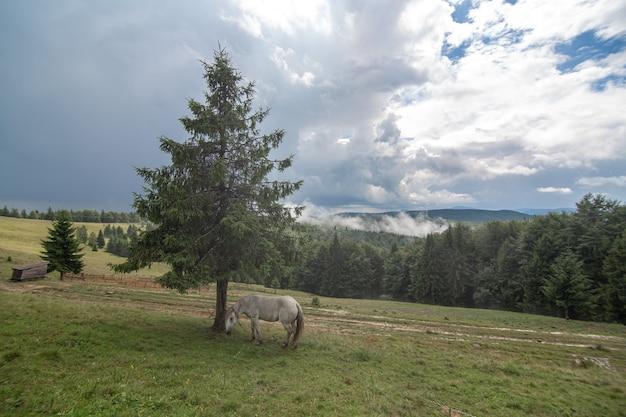 Сельский природный ландшафт. лошадь пасется в одиночестве в высокогорном поле. природные пейзажи.