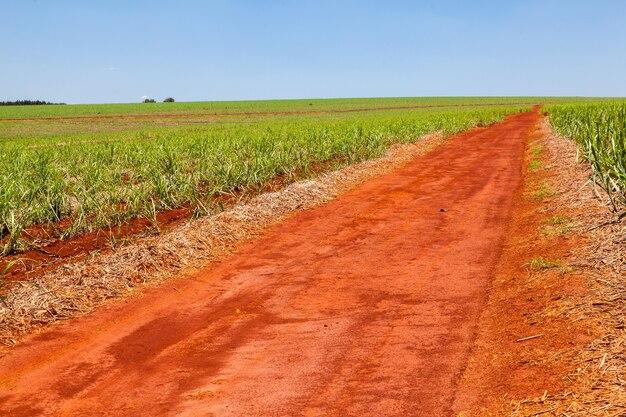 Сельская оранжевая грунтовая дорога на плантации сахарного тростника с голубым небом и далеким горизонтом