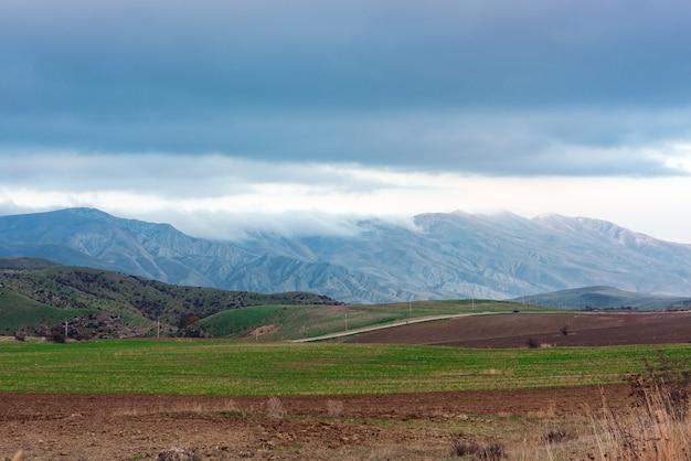 緑の農民畑の間の田舎道