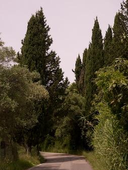 Rural road in corfu