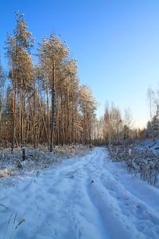 Rural road in evening wood