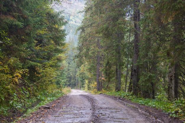 Сельская дорога в лесу, сша,