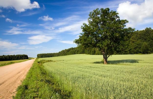 여름철 연도의 시골 길