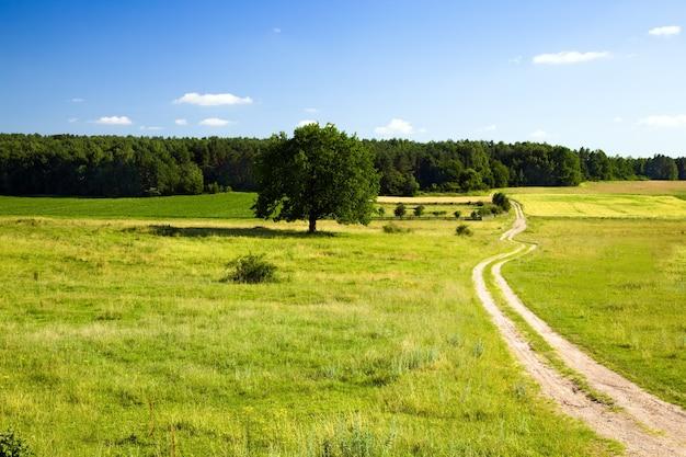 夏の田舎道 Premium写真